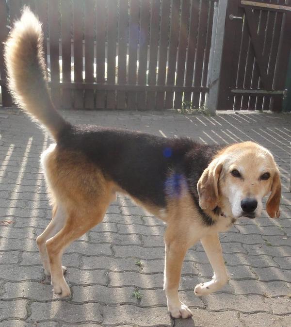 Hunde in Italien - ein ganzes Leben im Canile 15442400ss