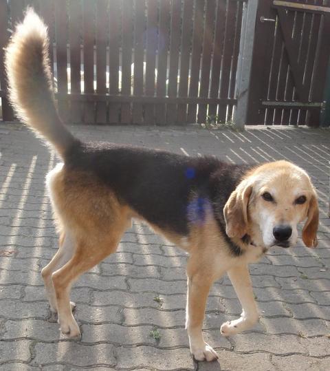 Hunde aus Italien suchen ein Zuhause!!! Ein ganzes Leben im Canile! - Seite 2 15449966ch