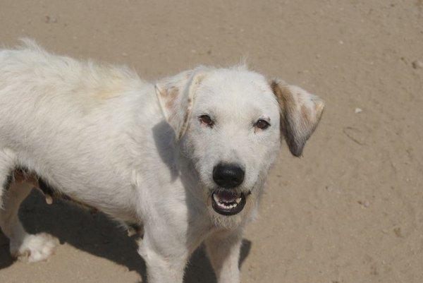Bildertagebuch - Blanca, Hundemami von der Straße... - in Spanien ZUHAUSE GEFUNDEN! 15569383zt