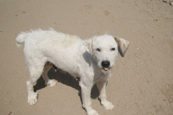 Bildertagebuch - Blanca, Hundemami von der Straße... - in Spanien ZUHAUSE GEFUNDEN! 15569384hf