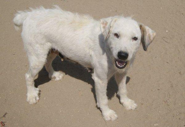 Bildertagebuch - Blanca, Hundemami von der Straße... - in Spanien ZUHAUSE GEFUNDEN! 15569385oz