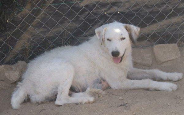Bildertagebuch - Blanca, Hundemami von der Straße... - in Spanien ZUHAUSE GEFUNDEN! 15569386ys