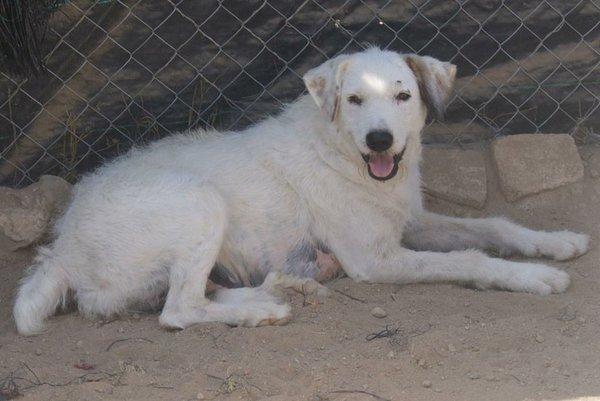 Bildertagebuch - Blanca, Hundemami von der Straße... - in Spanien ZUHAUSE GEFUNDEN! 15569387xu