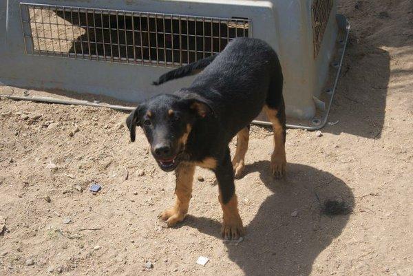 Bildertagebuch - Titan, ein schüchterner Hundebub... - in Spanien VERMITTELT! 15577525ea