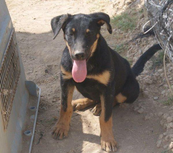 Bildertagebuch - Millie, hübsches schüchternes Hundemädel... - in Spanien VERMITTELT! 15577663fa