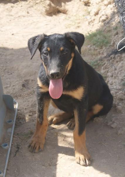 Bildertagebuch - Millie, hübsches schüchternes Hundemädel... - in Spanien VERMITTELT! 15577664wn