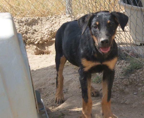 Bildertagebuch - Millie, hübsches schüchternes Hundemädel... - in Spanien VERMITTELT! 15577667fg