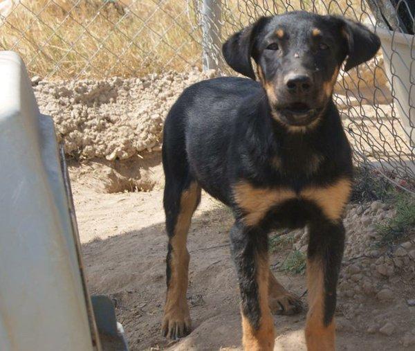 Bildertagebuch - Millie, hübsches schüchternes Hundemädel... - in Spanien VERMITTELT! 15577668vp