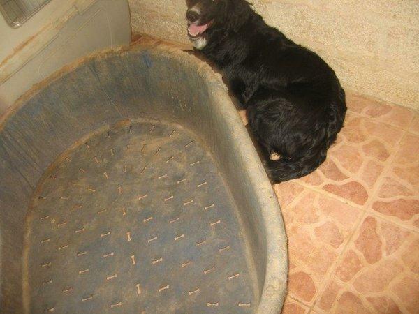 Bildertagebuch - Jule, wundersschönes schwarzes Hundemädel... - in Griechenland VERMITTELT! 15582084ft