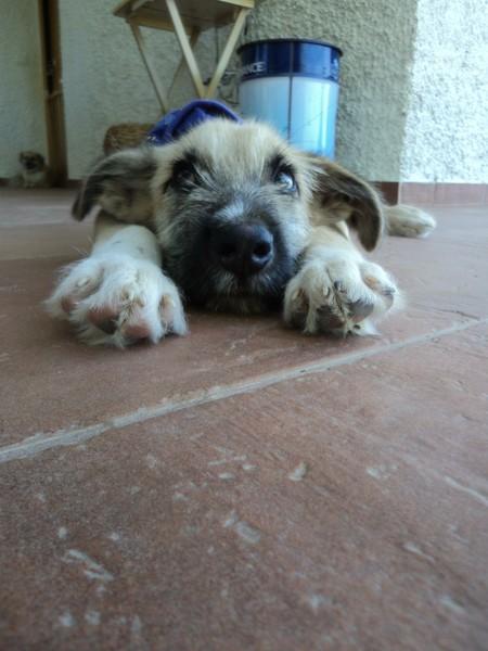 Bildertagebuch - Ordi, blinder Sonnenschein mit einem Herzen aus Gold möchte endlich glücklich sein! - in Spanien ZUHAUSE GEFUNDEN! 15629764ne