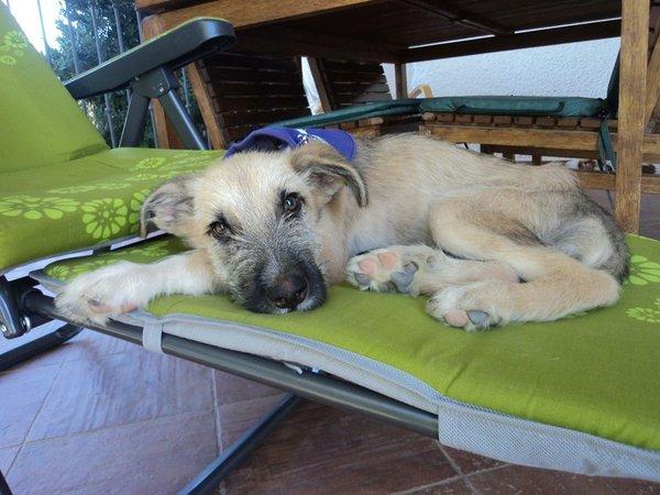 Bildertagebuch - Ordi, blinder Sonnenschein mit einem Herzen aus Gold möchte endlich glücklich sein! - in Spanien ZUHAUSE GEFUNDEN! 15629767aj