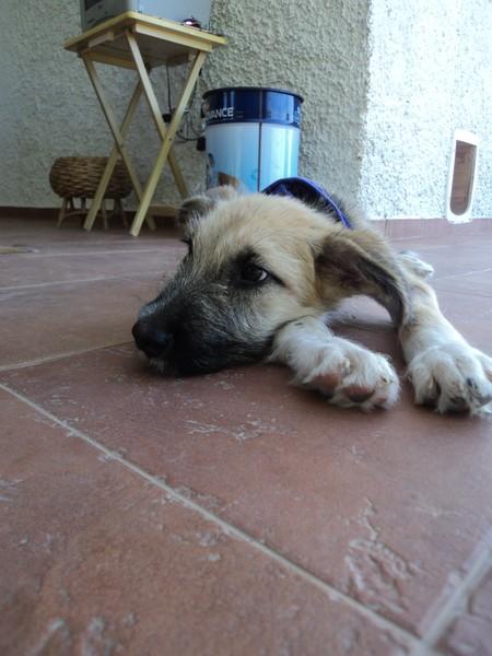 Bildertagebuch - Ordi, blinder Sonnenschein mit einem Herzen aus Gold möchte endlich glücklich sein! - in Spanien ZUHAUSE GEFUNDEN! 15629770mg