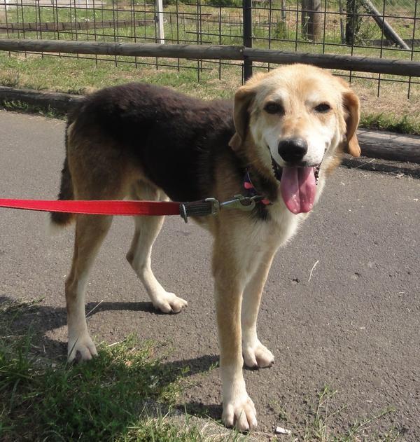 Hunde in Italien - ein ganzes Leben im Canile 15750938gt