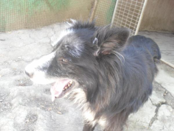 Hunde in Italien - ein ganzes Leben im Canile - Seite 2 15752834mu
