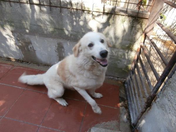 Hunde in Italien - ein ganzes Leben im Canile - Seite 2 15892081au