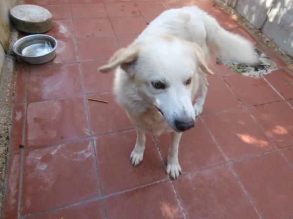 Hunde in Italien - ein ganzes Leben im Canile - Seite 2 15892082mp