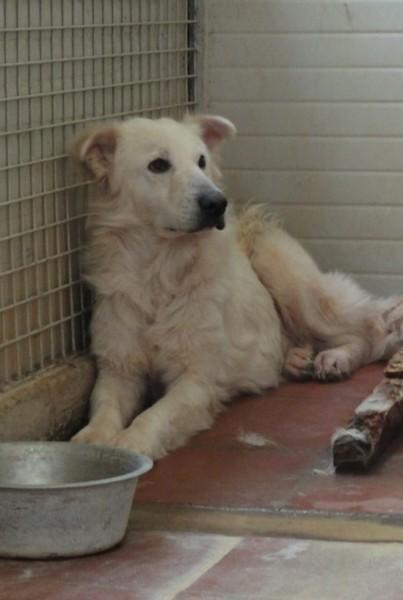Hunde in Italien - ein ganzes Leben im Canile - Seite 2 15892084ry