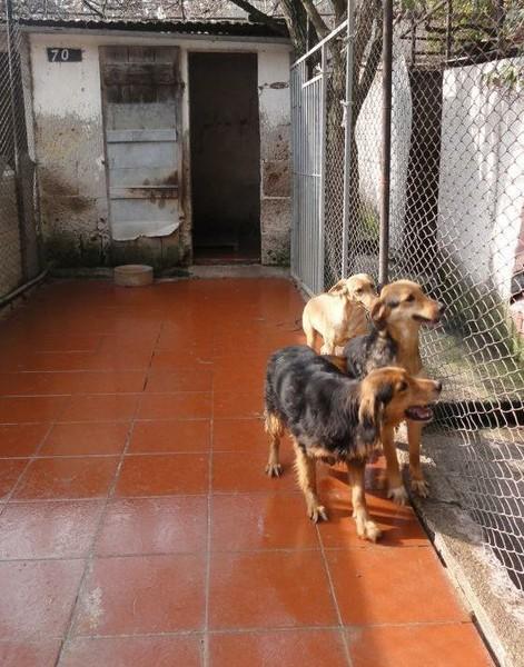 Hunde in Italien - ein ganzes Leben im Canile - Seite 2 15892142zw