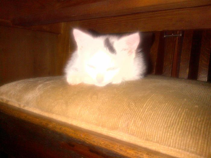 Katzenkinder suchen Zuhause 15900599mt