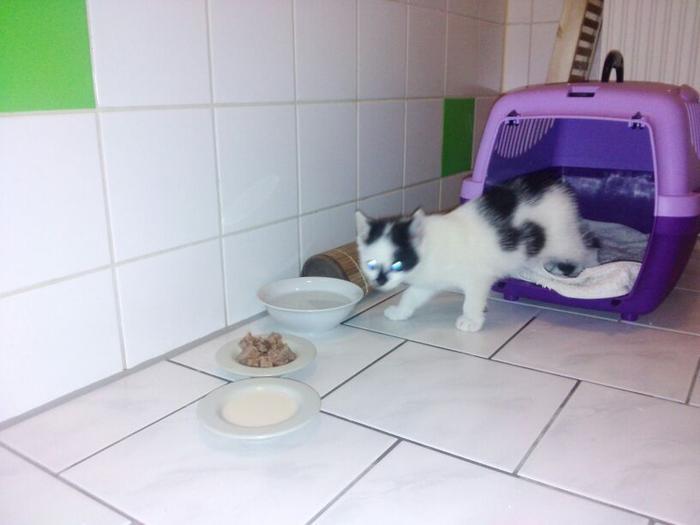 Katzenkinder suchen Zuhause 15900688ej