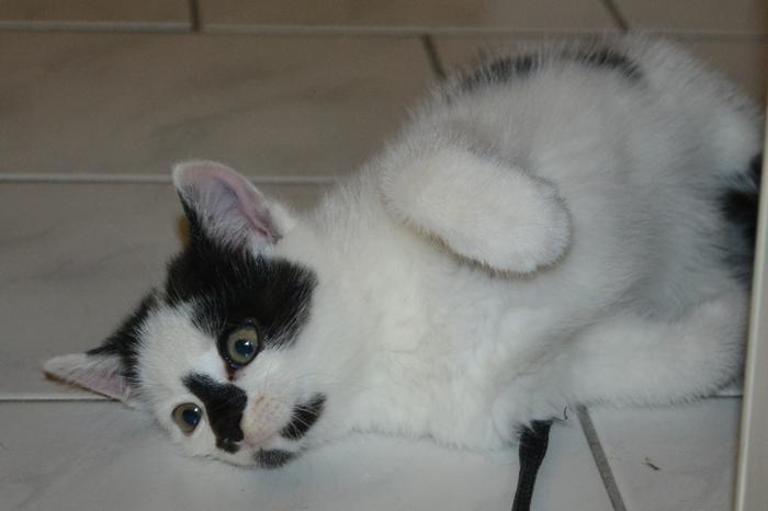 Katzenkinder suchen Zuhause 15929241ao
