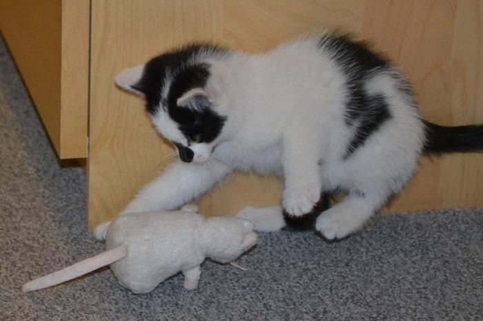 Katzenkinder suchen Zuhause 15929243uq
