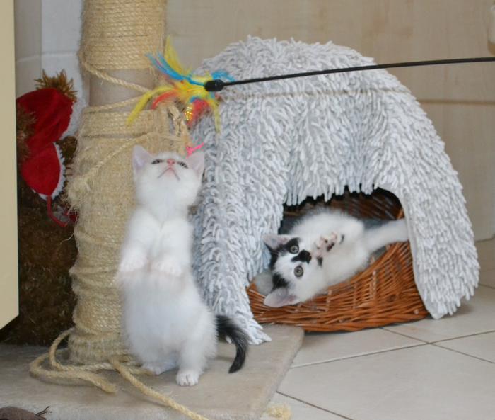 Katzenkinder suchen Zuhause 15929247dw