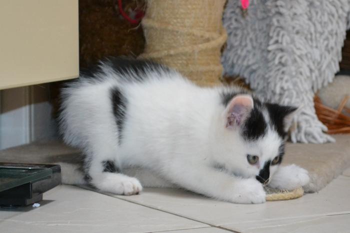 Katzenkinder suchen Zuhause 15929249bm