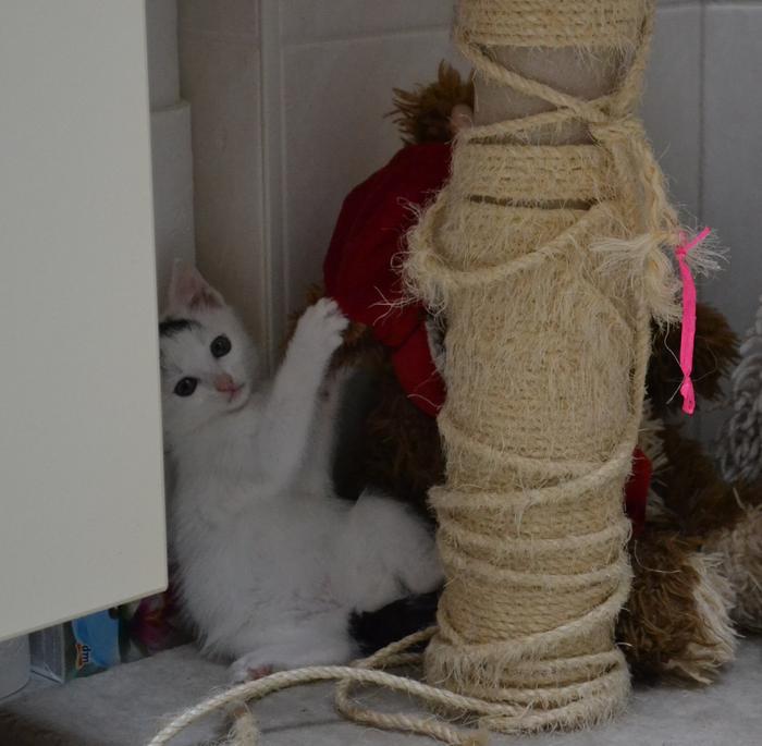 Katzenkinder suchen Zuhause 15929298ah