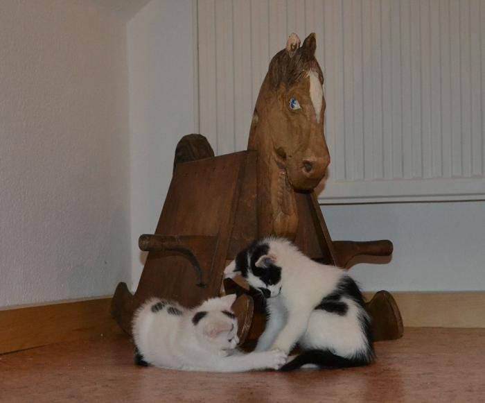 Katzenkinder suchen Zuhause 15929318gk
