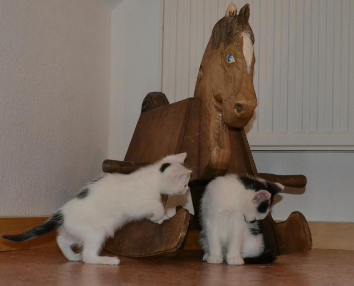 Katzenkinder suchen Zuhause 15929319bn