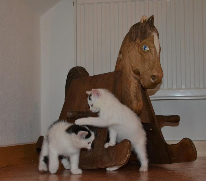 Katzenkinder suchen Zuhause 15929321to