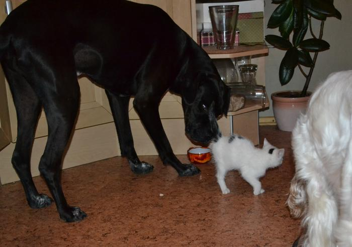 Katzenkinder suchen Zuhause 15961241rx