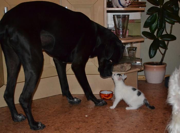 Katzenkinder suchen Zuhause 15961242rt