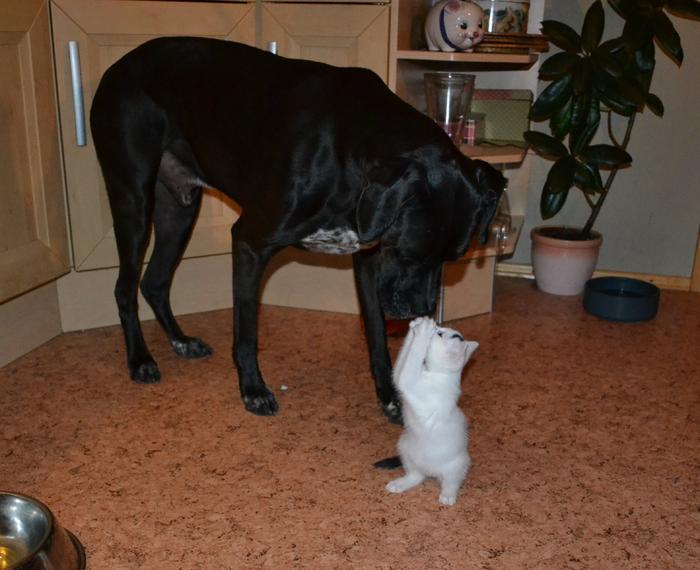 Katzenkinder suchen Zuhause 15961246wh