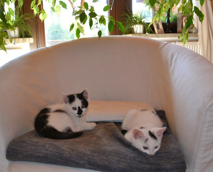 Katzenkinder suchen Zuhause 16017849ox