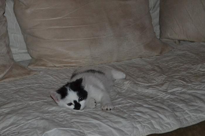 Katzenkinder suchen Zuhause 16043095kl