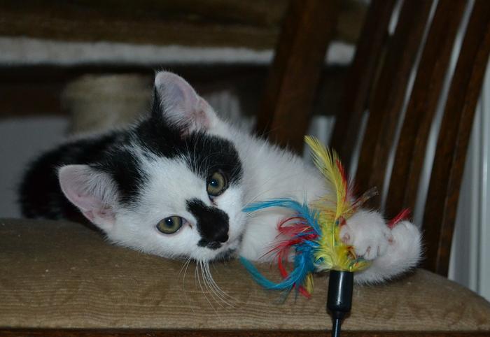 Katzenkinder suchen Zuhause 16043101cq