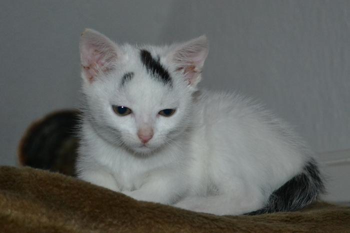Katzenkinder suchen Zuhause 16043103hs