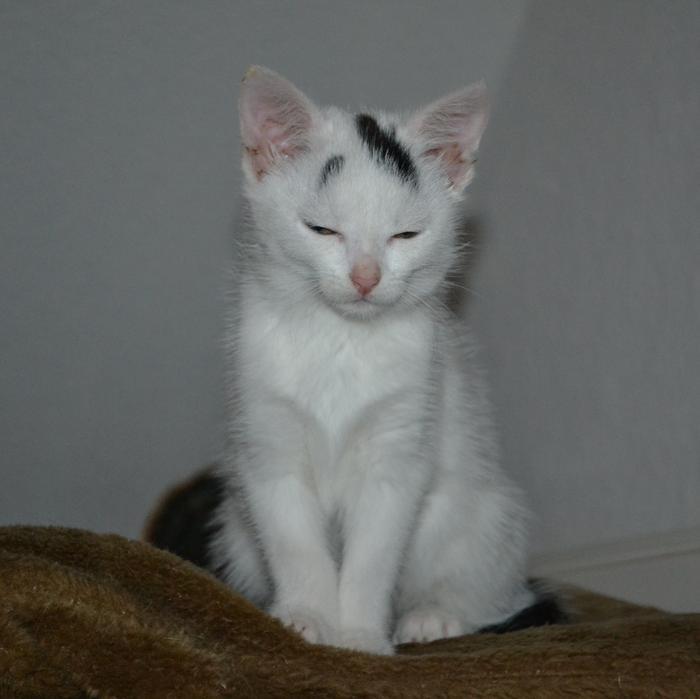 Katzenkinder suchen Zuhause 16043332al