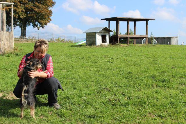 Aris, Watz und Zerge warten auf ihre Menschen auf dem Hasenberghof in der Eifel 16082548ut