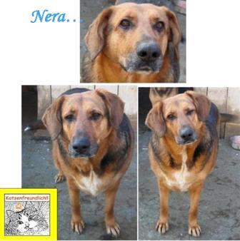 Nera (weibl.,kastr.,ca.2008 geb.,ca. 60cm groß), sucht bis 20.10.13 einen neuen Platz 16092873ws