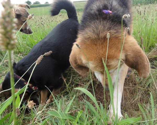 Hunde in Italien - ein ganzes Leben im Canile - Seite 3 16149669hq