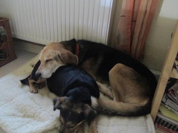 Hunde in Italien - ein ganzes Leben im Canile - Seite 3 16149671nb