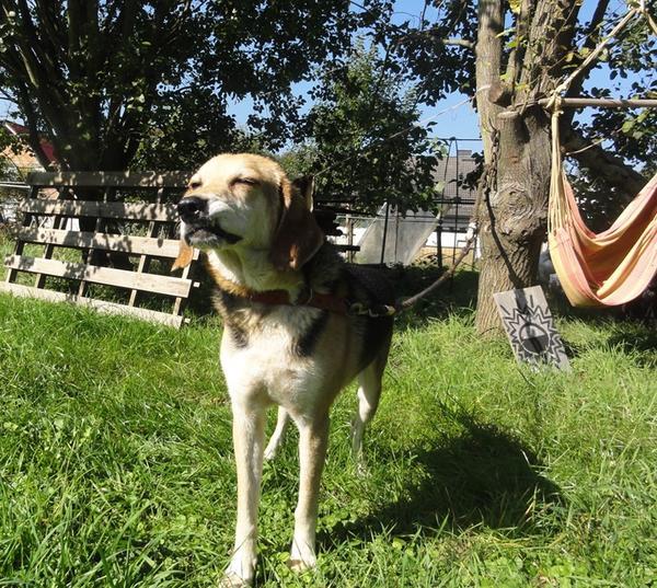 Hunde in Italien - ein ganzes Leben im Canile - Seite 3 16149673wf