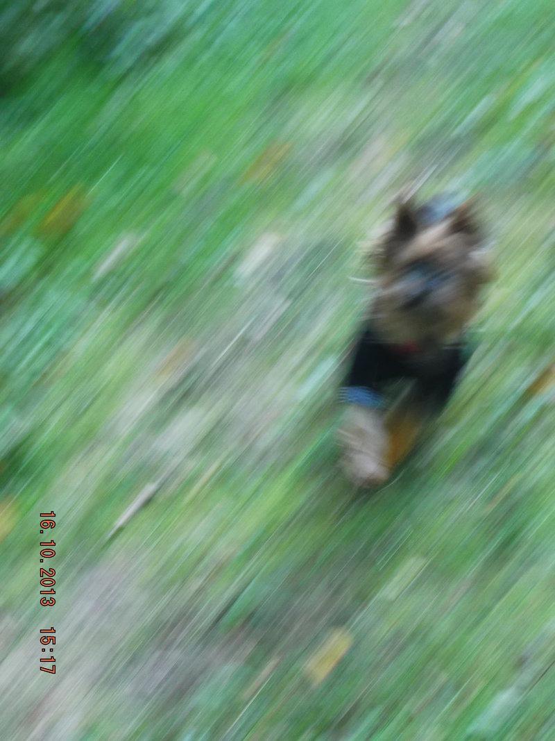 Milli ist zu Hause angekommen - Seite 3 16189706ow