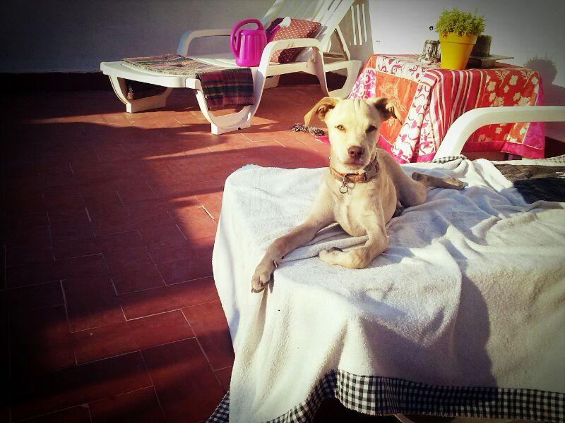 Bildertagebuch - Eros, kleiner blonder Lausbub zum verlieben... - in Spanien ZUHAUSE GEFUNDEN! 16411287ho