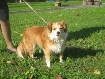 Sissy, liebe kleine Hundeprinzessin... 16471739rt