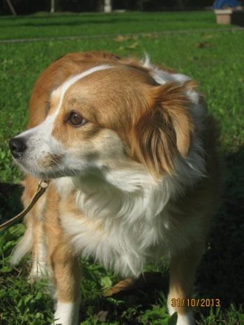 Sissy, liebe kleine Hundeprinzessin... 16471740jz