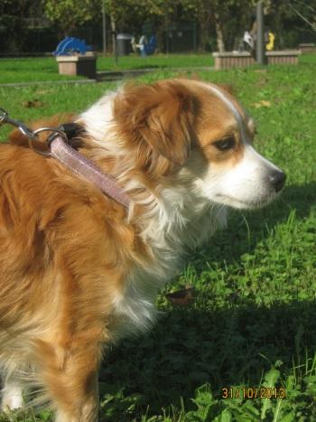 Sissy, liebe kleine Hundeprinzessin... 16471741us
